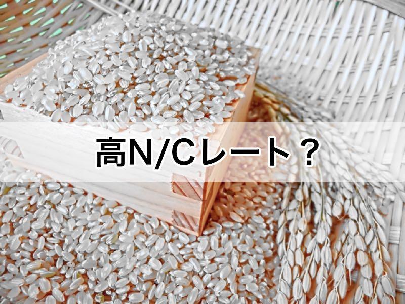 高N/Cレートの食品 ダイエット