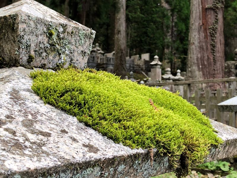 高野山は魅力がいっぱい 国際化がすすむ高野山