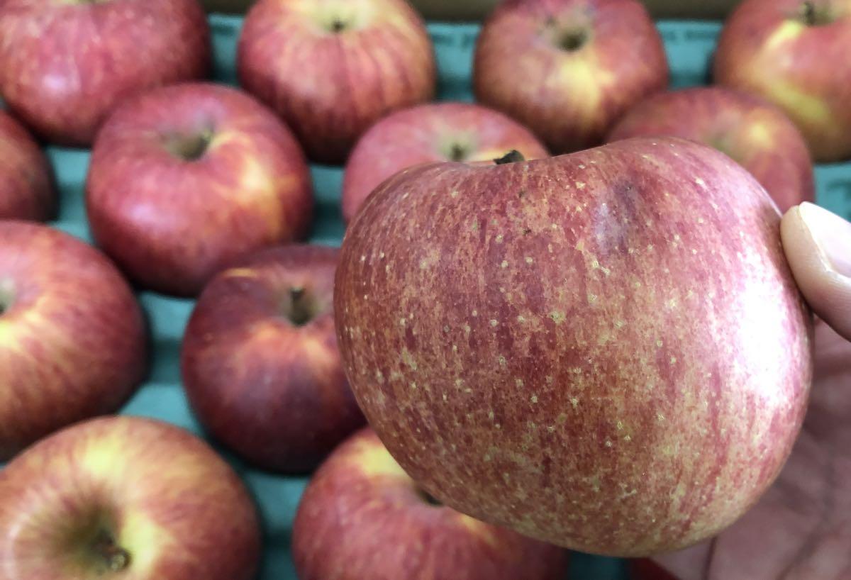 白井さん家の無農薬有機栽培のリンゴ