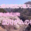 和歌山の穴場花見スポット【広川ダムの桜】がすごい!広川町を満喫しよう!