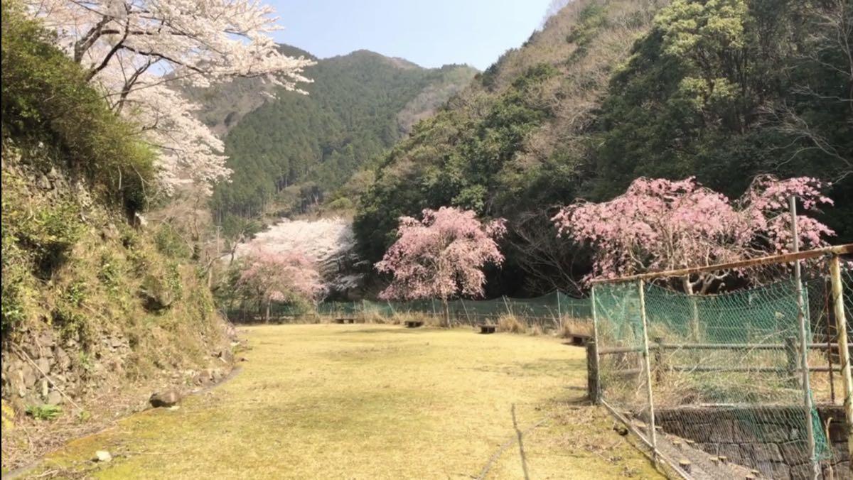 和歌山県 穴場花見スポット 広川ダムの桜